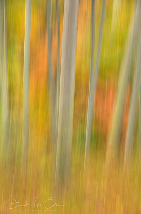 A blur of bamboo and fall color in Ohara, Japan created by panning the camera while shooting.