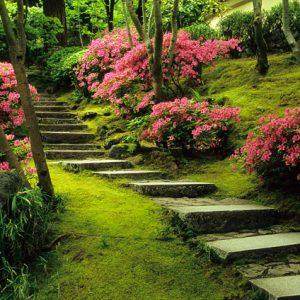 JG07SP Natural Garden Azaleas