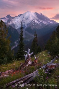 Mt. Rainier National Park, Washington, USA