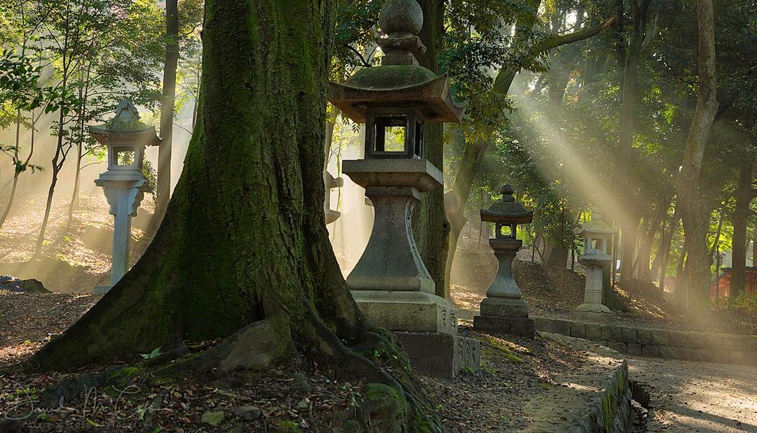 Lantern Rays
