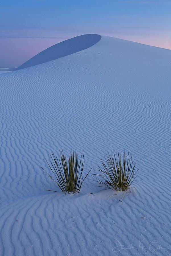 Dune Curl