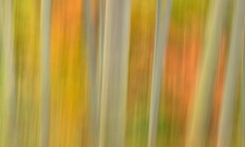 Bamboo Blur
