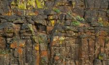 Lichen Wall