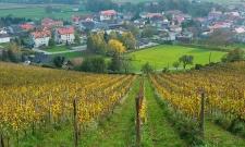 Slovenia Vineyard