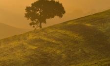 Tuscan Lone Tree