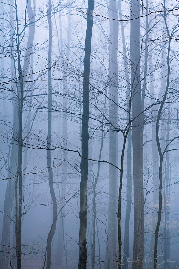 Forest Fog Great Smokies NP