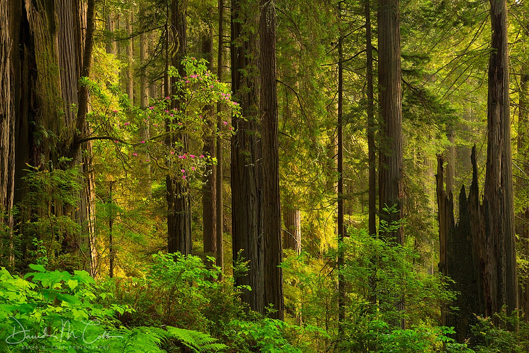 Forested
