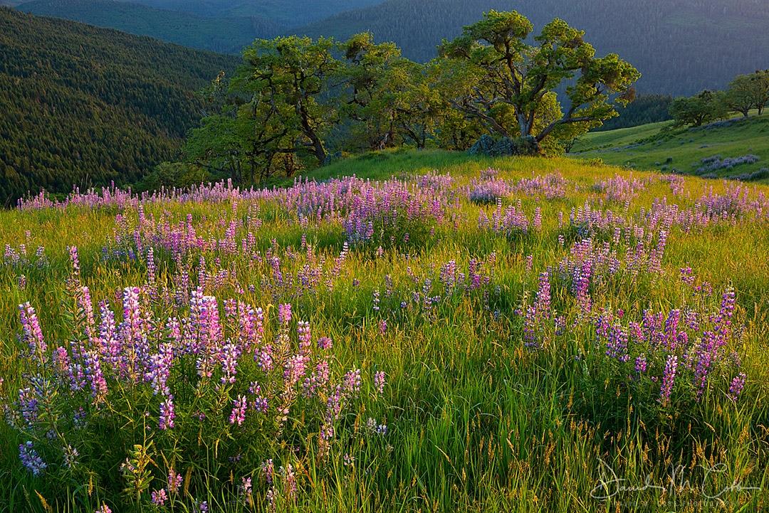 Bald Hills Redwoods National Park