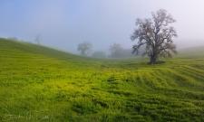 Grassland Fog