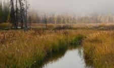Mt McGowan Mist