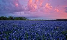 Texas Spring Sunrise