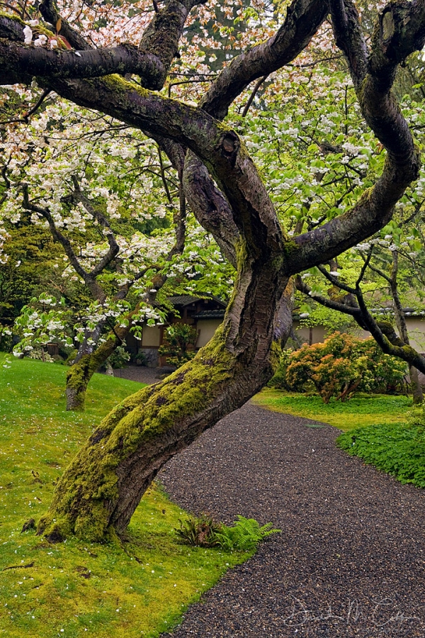 UBC11SPJG Cherry Tree Trunk