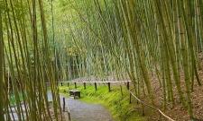 HK11JGCA Bamboo Garden