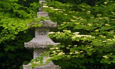 MNAJG11SP Pagoda Lantern & Dogwood