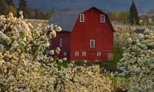 Red Barn Orchard